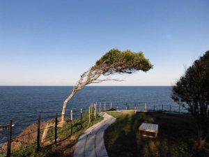 聖域の岬から見た海1